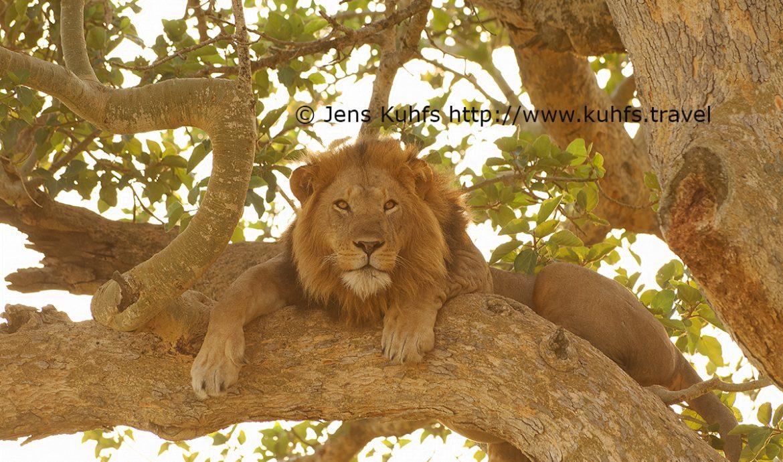 Uganda, Africa, Safari, luxury, travel destination